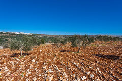 Hills of Galilee Royalty Free Stock Photo
