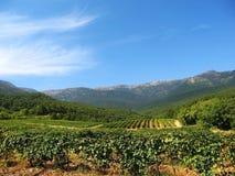 Hills and grapes plantation Royalty Free Stock Image