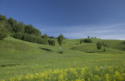 Hills with grass and trees. Summer hills with green grass and trees Royalty Free Stock Photography