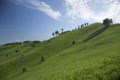 Hills with grass and trees Royalty Free Stock Photo