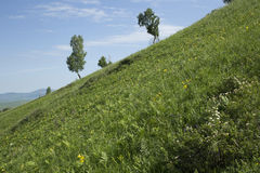 Hills with grass and trees. Summer hills with green grass and trees Royalty Free Stock Photo