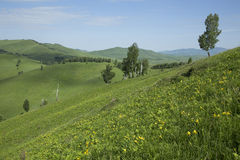 Hills with grass and trees. Summer hills with green grass and trees Royalty Free Stock Image
