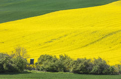 Hills in green and yellow fields Stock Images