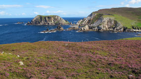 Hills of Heather. The colourful heather on the hillsides of An Port, near Glencolmcille, Co Donegal Royalty Free Stock Image