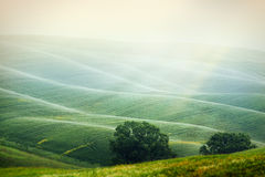 The hills in the Italian Tuscany Stock Image