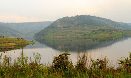 Hills of Lake Bunyoni. One of the many terraced hills surrounding Lake Bunyoni, in Uganda royalty free stock images