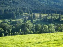 Hills landscape with forest and pasture stock images