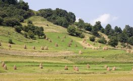 Hills and meadows of the Western Ukraine Royalty Free Stock Photos