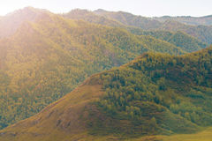 The hills and mountains of the Altai. The Siberian forest Stock Photography
