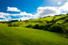Hills of New Zealand. Beautiful green rolling hills of Southern New Zealand at dusk, Canterbury Stock Image