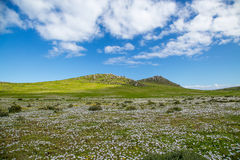 Hills and pastures. Green pastures with colourful flowers. Two hills with boulders, blue skies and white clouds Royalty Free Stock Photography