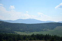 Hills and pines. Hills with pine trees beneath blue sky Royalty Free Stock Photography
