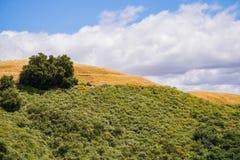 Hills in the Rancho Canada del Oro Open Space Preserve, south San Francisco bay area, San Jose, California stock photography