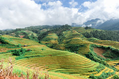 Hills of rice terraced fields Stock Photos