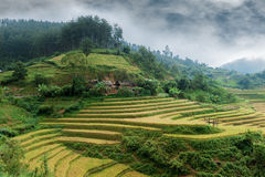 Hills of rice terraced fields Stock Photography