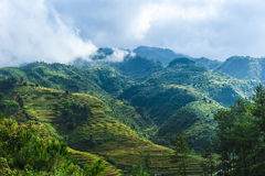 Hills of rice terraced fields and mountains in clouds Stock Photo