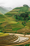 Hills of rice terraced fields Royalty Free Stock Images