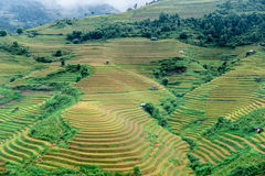 Hills of rice terraced fields Royalty Free Stock Image