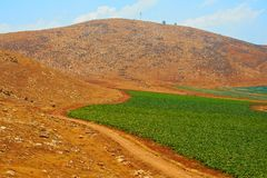 Hills of Samaria Royalty Free Stock Photo