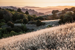 Hills in the San Francisco Bay Area at sunset. Russian Ridge, meadows above the Pacific ocean Royalty Free Stock Images
