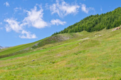 Hills and sky. Hills of green grass,trees and blue sky Stock Photography