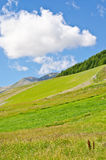 Hills and sky. Hills of green grass,trees and blue sky Stock Images