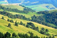 Hills. Sunny hills covered with green spruce - Pieniny National Park Stock Image