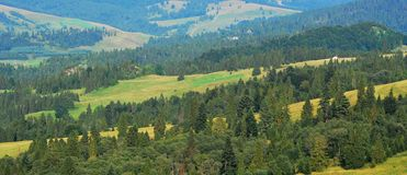 Hills. Sunny hills covered with green spruce - Pieniny National Park Royalty Free Stock Photography