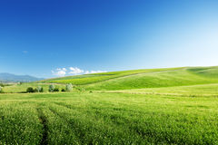 Hills in sunny day Tuscany Stock Photos