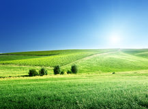 Hills in sunny day Tuscany Royalty Free Stock Photography