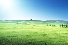 Hills in sunny day Tuscany Stock Photography