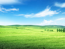 Hills in sunny day Tuscany Royalty Free Stock Image