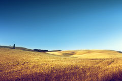 Hills in sunny day Tuscany Royalty Free Stock Photo