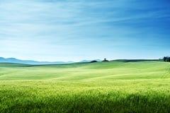 Hills in sunny day Tuscany, Italy Royalty Free Stock Photos