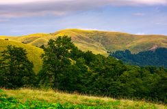 Hills of Svydovets ridge behind the beech forest. Lovely scenery of Carpathian mountains, Ukraine Royalty Free Stock Images