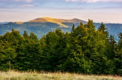 Hills of Svydovets ridge behind the beech forest. Lovely scenery of Carpathian mountains, Ukraine stock image
