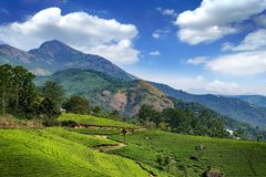 Hills and tee plantations in Kerala royalty free stock photography