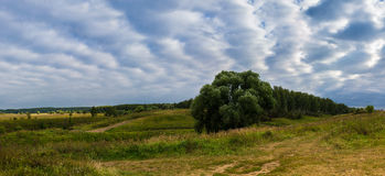 Hills & trees. Panorama of fields with trees and dramatic clouds Royalty Free Stock Image