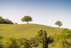 Hills of Tuscany. Beautiful spring time in Italy Royalty Free Stock Photography