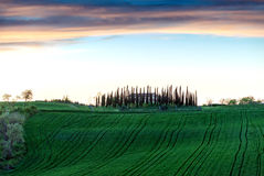 Hills of Tuscany. Beautiful spring time in Italy Royalty Free Stock Image