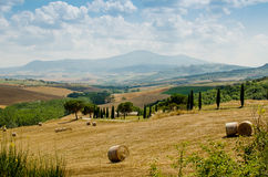 Hills of Tuscany with haycocks, fields and cypresses.  Royalty Free Stock Photo