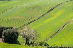 Hills of Tuscany, Italy Stock Photos