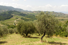 Hills in Tuscany near Artimino Royalty Free Stock Photo
