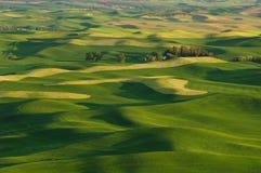 Hills-und Weizenfelder stockbilder