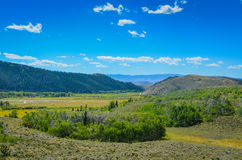 Hills and Valleys - Medicine Bow National Forest - Wyoming. Grasslands dotted with wild flowers, sage bush and pine tree covered hills, and a big blue sky in a Stock Photo