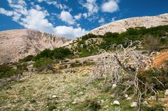 The hills and vegetation Royalty Free Stock Photography