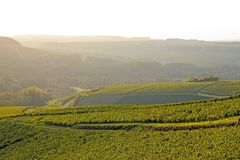 Hills of vines, Chablis wine, near Auxerre Burgundy, France Royalty Free Stock Images