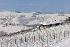 Hills and vineyard in winter. Stock Image