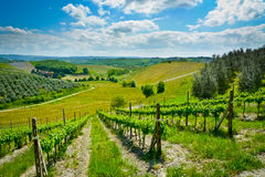 Hills and vineyards Royalty Free Stock Image