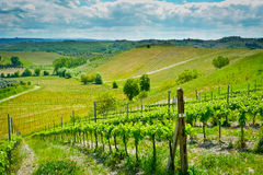 Hills and vineyards Royalty Free Stock Photography
